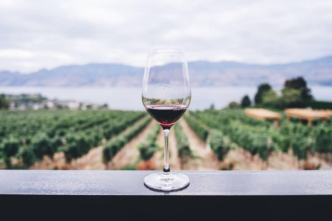 Le Vin et l'Afrique du Sud