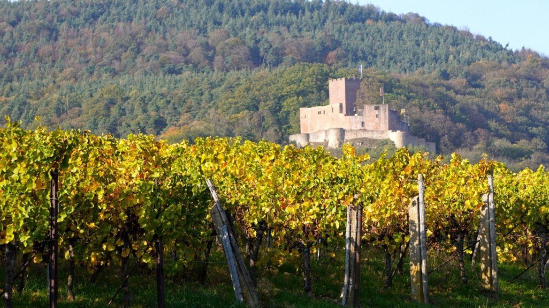 Châteaux viticoles : Les châteaux et le vin