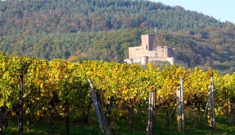 Les châteaux viticoles