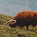 L'argentine et la viande bovine
