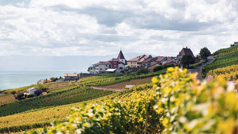 Les chateaux et domaines viticoles à découvrir